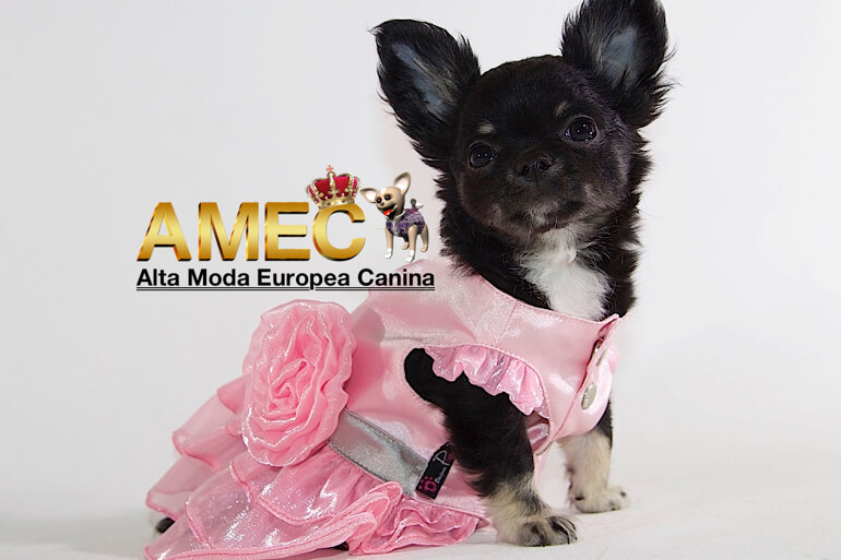 moda-canina-color-rosa