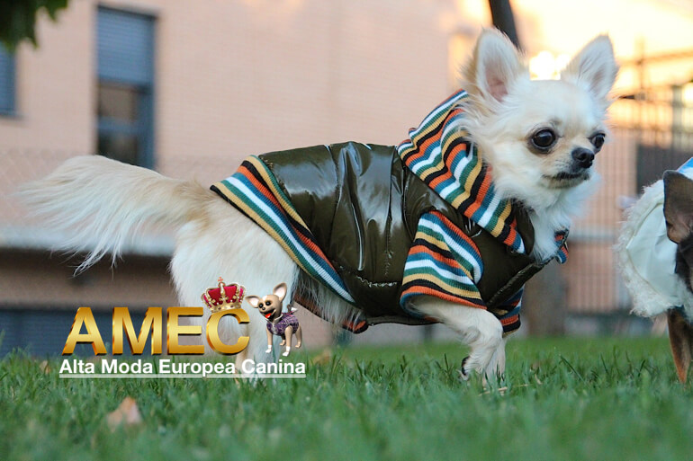 ropa-perros-outlet