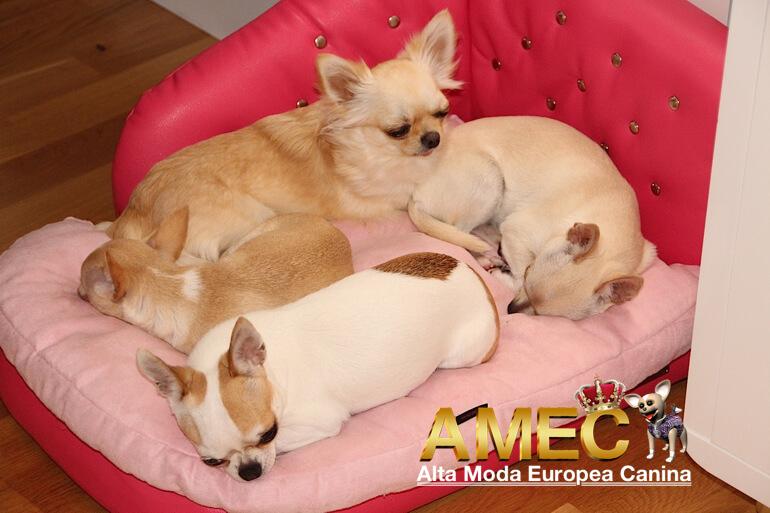 sofas-y-camas-perros